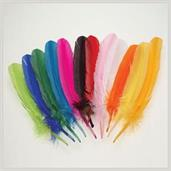 Asst Turkey Feathers (Include 12 Units)